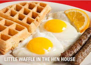 little waffle in the hen house